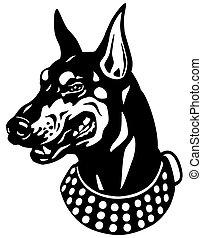 doberman head - dog head, doberman pinscher breed, black and...
