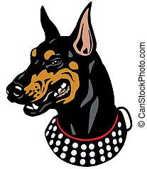 doberman head - dog head, doberman pinscher breed, ...