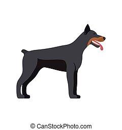 Doberman Pinscher dog breed - on white background. Vector illustration