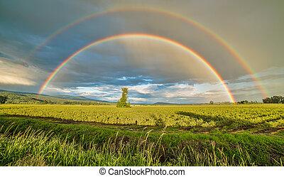 doble, encima, árbol, arco irirs