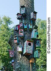 doboz, öreg, színes, felakaszt, búvóhely, fa épület, törzs, madár
