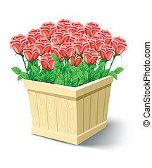 doboz, rózsa, elszigetelt, vektor, white virág