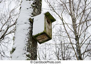 doboz, tél, havas, fa, hozzácsatolt, fészkelés, nyírfa, madár