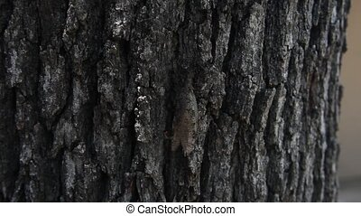 Dobsonfly climbing a tree - This is a video of a Dobsonfly...