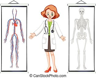 Doctor and two human system diagrams illustration