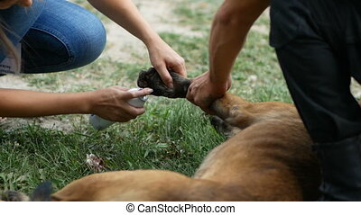 doctor draws a tampon stopping the blood from the wound on the dog's paw and treats it with a spray