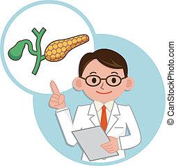 Doctor for a description of the pancreas