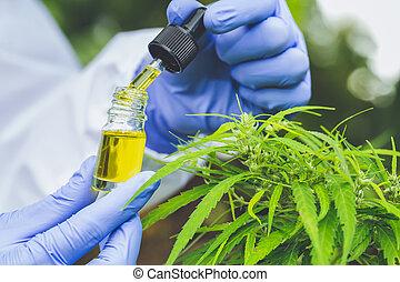 doctor hand holding bottle of Cannabis oil against Marijuana...
