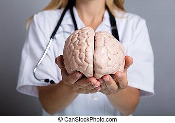Doctor Holding Human Brain Model