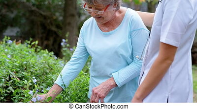Doctor supporting to senior woman while touching leaves 4k -...