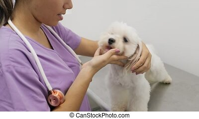Doctor Visiting Dog In Studio With Vet And Sick Pet - Young...