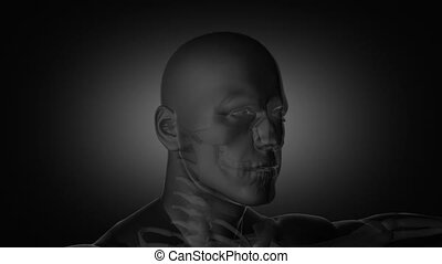 Doctors working on x-ray - Animation with doctors working on...