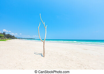 dode boom, op, mooi, strand