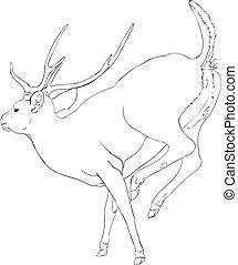 Doe deer sketch  illustration