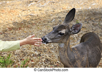 Doe and a child's hand. California. Yosemite National Park