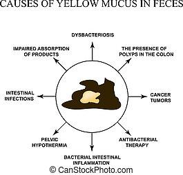 doenças, muco, feces., isolado, amarela, experiência., infographics., vetorial, ilustração, causas, gastrointestinal, tract.