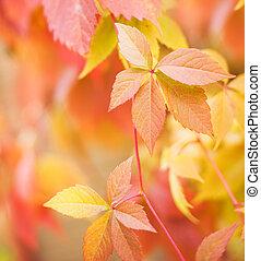 dof), liście, (shallow, zamazany, jesień, tło, abstrakcyjny