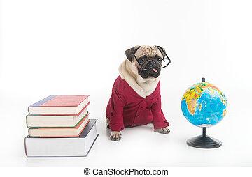 dog., 面白い, モデル, 地球, 隔離された, 犬, 間, 本, 痛みなさい, 白, 衣類, 山, 赤, ガラス