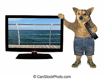 dog, 2, ver, tv