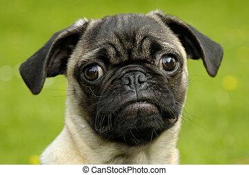 Dog - A beautyful dog