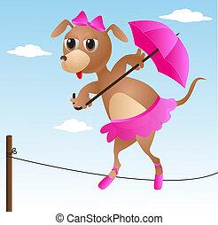 dog acrobat