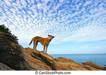 Dog against blue sky