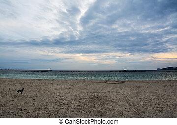 dog alone at the beach