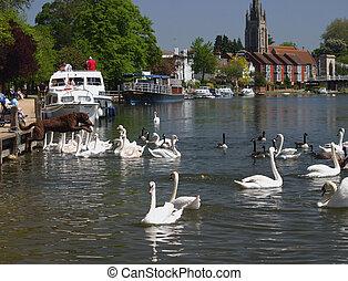 dog amongst swans