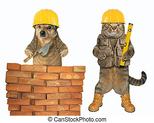 Dog and a cat build a wall 2