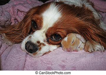 Dog and baby rabbit together. animal friendship. Cute animals pets.