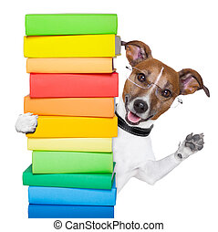 dog and books - dog behind a tall stack of books