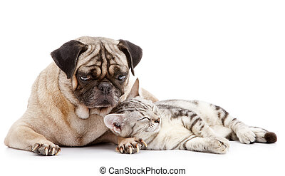 dog and cat - cat take a nap while pug looking after