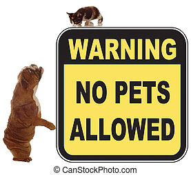 dog and cat chase in a no pets allowed sign