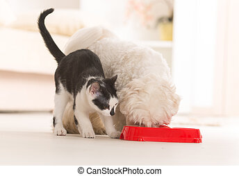 Dog and cat eating food from a bowl