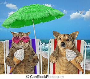 Dog and cat eating ice cream under a umbrella 2