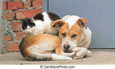 Dog and cat. Friendship forever.