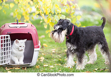 Dog and cat in carrier on gras