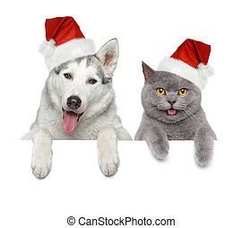 Dog and cat in Santa red hats