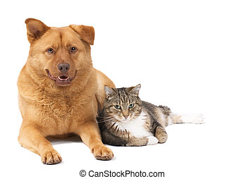 Dog and Cat isolated on white background.