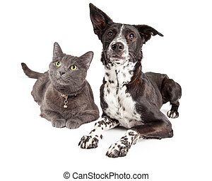 Dog and Cat Laying Looking Up