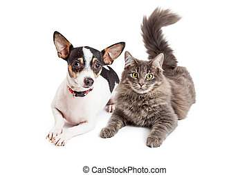 Dog and Cat Laying Together Looking Forward