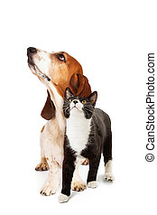 Dog and Cat Looking Up With Interest