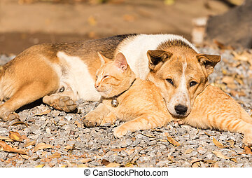 dog and cat lying together - the dog and cat lying together...