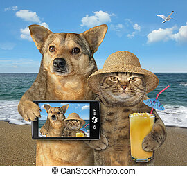 Dog and cat made selfie on the beach 2