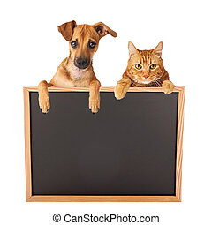 Dog and Cat Over Blank Sign