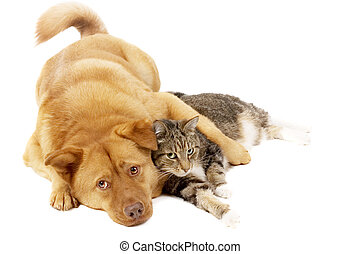 Dog and Cat Relaxing - Dog and cat relaxing on white...