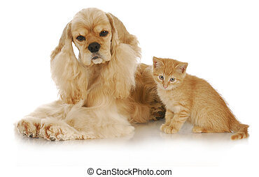 dog and cat - adorable kitten and dog interacting with...