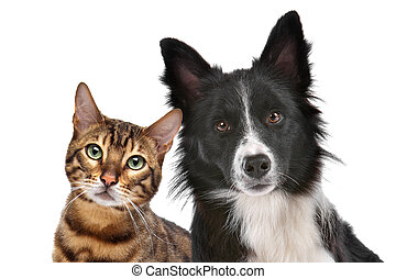 Dog and Cat - Close up portrait of dog and cat in front of...