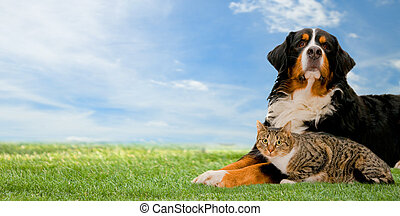 Dog and cat together on grass, sunny spring day and blue...