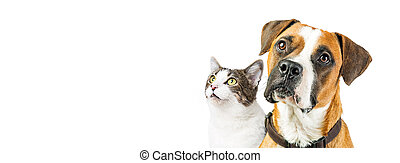 Dog and Cat Together on White Horizontal Banner